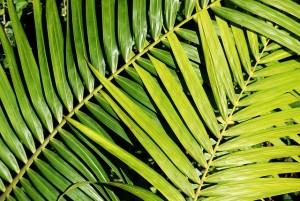 palm-422928_640